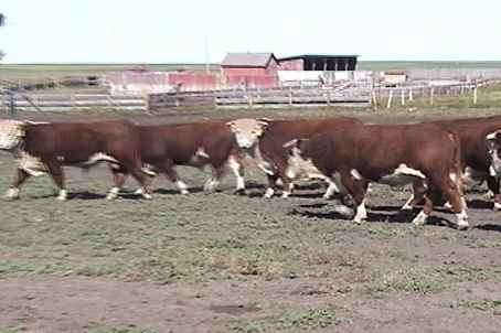 Bulls 2002 homeplace video 1