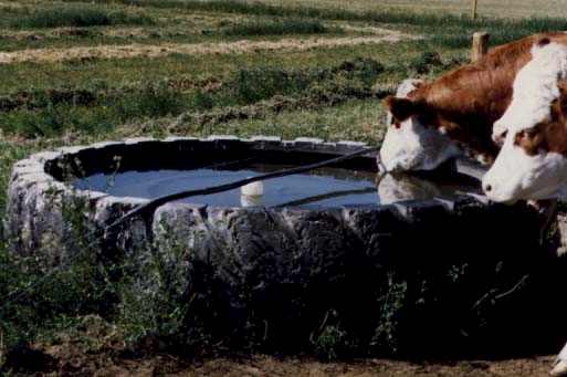 Bull Proof Water Trough
